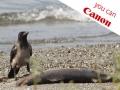 Canon EOS 5D Mark II: filmati con qualità professionale